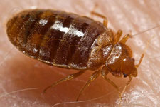 Git rid of bedbugs with heat treatments. Thermal remediation kills adult bedbugs and their eggs.