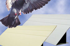 Bird slopes are used to keep birds from perching on your business's building.