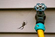 Pest Control for Residential Customers