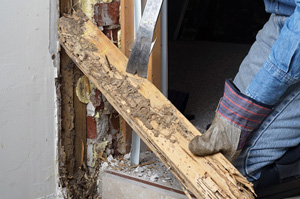 Termite inspections, certifications and repair work.